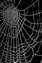 Frozen spider web isolated on black Royalty Free Stock Images