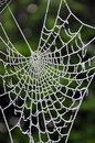 Frozen Spiderweb Stock Images