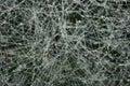 Frozen spiderweb Stock Photos