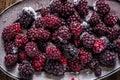 Frozen summer forest wild  blackberries, full frame background Royalty Free Stock Photo