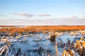 Frozen swamp in Drenthe Stock Images