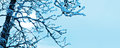Frozen tree Royalty Free Stock Photography