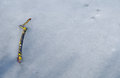 Frozen tree branch Stock Images