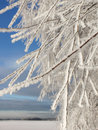 Frozen tree branches on winter Royalty Free Stock Photo