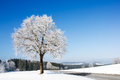 Frozen tree on winter landscape and blue sky Royalty Free Stock Photo