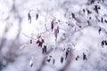 Frozen trees branch macro background Stock Photos