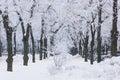 Frozen trees on city lane Royalty Free Stock Photo