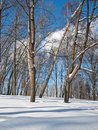 Frozen trees in the park. Winter day. Stock Images