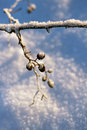 Frozen twig winter season concept tree branch cold Stock Photography