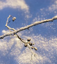 Frozen twig winter season concept tree branch cold Stock Image