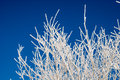 Frozen white tree twigs against blue skye with crystals a background Stock Photo
