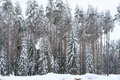 Frozen winter forest Stock Photography