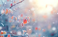 Frozen winter nature background Royalty Free Stock Photo