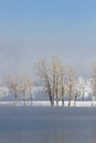 Frozen winter trees landscape with a lake in the foreground Stock Photography