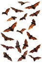 Fruit bats flying foxes composite in the sky Royalty Free Stock Images