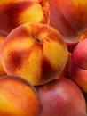 Fruit fresh a peach and apricot hybrid Royalty Free Stock Image