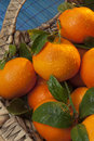 Fruit mandarin orange the is the of a small citrus tree citrus reticulata oranges are usually eaten plain or in Royalty Free Stock Image