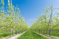 Fruit orchard Royalty Free Stock Photo