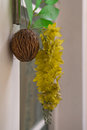 Fruit shell with artificial flower and leaf hanging on the wall.