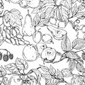 Fruit sketch Stock Images