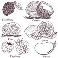 Fruit sketch collection of sketches part Royalty Free Stock Images