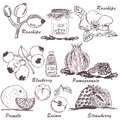 Fruit sketch collection of sketches part Stock Photos