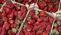 Fruit - Strawberries Royalty Free Stock Photo