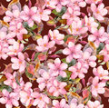 Fruit tree (apple or cherry) flowers. Seamless floral pattern. Aquarelle drawing on brown background Royalty Free Stock Photo