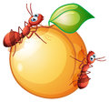 A fruit with two ants illustration of on white background Royalty Free Stock Photography