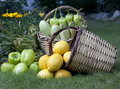 Fruit and Vegetable Baskets Stock Photos