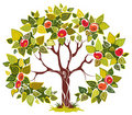 Fruitful apple tree on white background Royalty Free Stock Photography