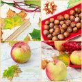 Fruits of apples and hazelnut collage with autumn ripe nuts fallen leaves Royalty Free Stock Image
