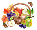 Fruits and berries in basket