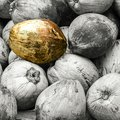 Fruits coconut whole many fruits palms peeled gray stands out single golden special design base close-up Royalty Free Stock Photo
