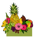 Fruits and flowers. Vector illustration.