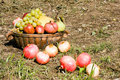 Fruits Harvest Royalty Free Stock Photo