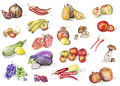 Fruits mushrooms vegetables isolated set handmade watercolor painting illustration white paper art background Stock Photo