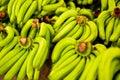 Fruits. Organic Bananas At Market. Healthy Raw Potassium Rich Fo Royalty Free Stock Photo
