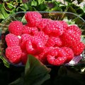 Fruits red redberry green grass Royalty Free Stock Photo
