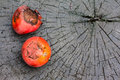 Fruits of sealing wax palm on wood cryrtostachys renda blum Stock Images