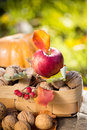 Fruits and vegetables in autumn outdoors thanksgiving holiday concept Royalty Free Stock Image