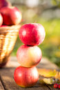 Fruits and vegetables in autumn outdoors thanksgiving holiday concept Stock Photography