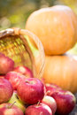 Fruits and vegetables in autumn outdoors thanksgiving holiday concept Royalty Free Stock Photo