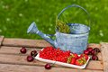 Fruits with watering can Stock Image