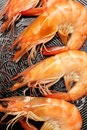 Frying shrimps close up lens Stock Photo