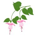 Fuchsia flower on the branch vector illustration Stock Photo