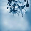 Fuchsia On A Soft Blue Backgro...