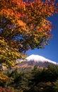 Fuji 67 mt dg ds. Obraz Stock