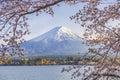 Fuji Mountain and Sakura Tree with Yacht Pier at Kawaguchiko Lake Royalty Free Stock Photo