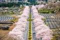 Fuji Reien Cemetery